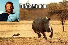 Memes De Chuck Norris - los mejores memes de chuck norris en honor a sus 77 años página 3