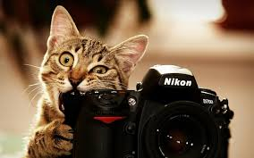 Best Photography Wallpaper Wiki Free Hd Cat Wallpapers Best Photography