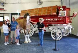 Budweiser Clydesdale Barn Visit The Budweiser Clydesdales In Missouri Traveling Mom