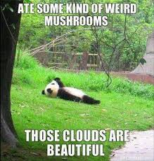 Bear Stuff Meme - those clouds are beautiful funny bear meme