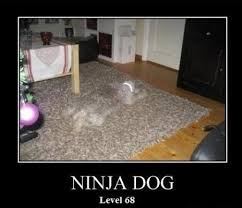Ninja Memes - 20 most funniest ninja meme pictures images funnyexpo
