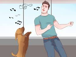 jogging with australian shepherd 4 ways to exercise with your dog wikihow
