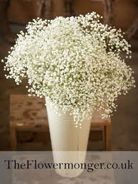 Baby S Breath Wholesale The 25 Best Gypsophila Flower Pictures Ideas On Pinterest