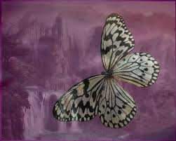 butterfly spiritual meaning and symbolism grannymoon s morning feast