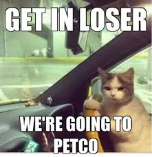 Funny Memes Videos - get in loser we are going to petco http www memefunnies com get
