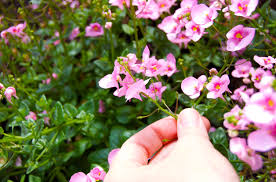 south african native plants classic landscaping blog archive south african plants for our