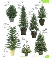 ornamental evergreen trees for landscaping ornamental evergreen