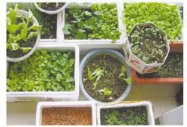 ordinateur de bureau darty 458996 阳台种菜 种的是幸福 纵览 科普