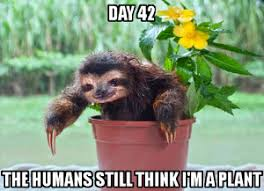 Sloth Meme Images - all things sloth pictures and memes of sloths