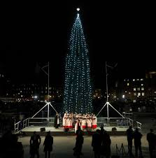 trafalgar square tree lit up after 700 mile trip from