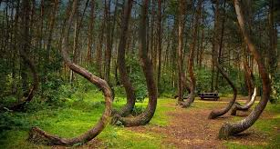 most beautiful trees in the world top ten list