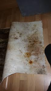 Schimmel Im Schlafzimmer Am Boden Gartenhaus Feuchtigkeit Und Schimmel Im Boden Holz