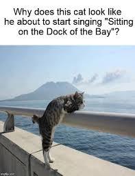 Cat Sitting Meme - pensive cat imgflip
