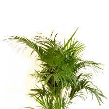 plante dans la chambre quelle plante d intérieur pour quelle pièce côté maison