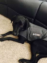 calming collar thunder coat calming collar bach u0027s calming drops calming dog