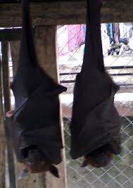 bats for sale hazmat modine photos travel diary 07