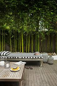 Privacy Walls For Patios by Best 25 Bamboo Privacy Fence Ideas On Pinterest Patio Privacy