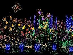 Botanical Garden Bellevue Attractive Bellevue Botanical Gardens Lights