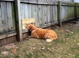 Garden Ideas For Dogs Pet Friendly Backyard Landscaping Ideas Friendly Backyard