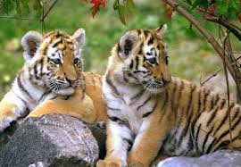 wildlife tours images Rajasthan yatra jpg
