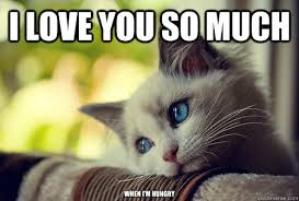 Love You So Much Meme - i love you so much when i m hungry first world problems cat
