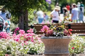 somerset county rose garden wins international award nj com