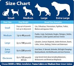 belgian sheepdog growth chart dog breed chart comparison