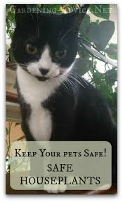 house plants safe for cats pets and house plants tips