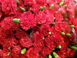 Red Carnations The Official Flower Of Mother U0027s Day Is Red Carnations Southern