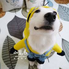 Dog Minion Halloween Costumes Clothes Punk Picture Detailed Picture Funny Halloween
