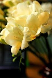 128 best names of flowers images on pinterest names of flowers