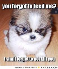 Dog Meme Generator - you forgot to feed me evil fluffy dog meme generator