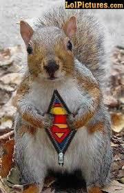 Dead Squirrel Meme - miss cellania squirrels
