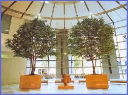 asianplants artificial trees silk trees ficus trees big trees