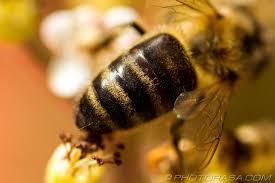 my bee utiful portrait of cynicaldoubt brigand u0027s haven