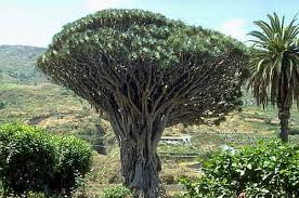 list of top 10 and trees most amazing trees