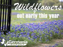 wet weather to make for long bloom season germania insurance