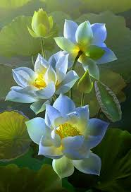 best 25 water lilies ideas on pinterest lily pond lily pad and