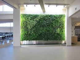 alluring green wall with simple house plants decoration feat plain
