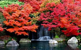 cute fall desktop backgrounds colorful trees in the autumn wallpaper location ideas