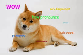 Orange Dog Meme - jimmyfungus com the best of doge the absolute best of the shibe