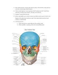 Human Anatomy Skull Bones Skull Notes