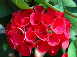 ornamental plants thailand ornamental plants thailand suppliers