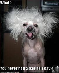 Bad Hair Day Meme - does a bad hair day leave you a little b