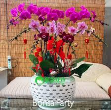 indoor planting sale phalaenopsis orchid plant free phalaenopsis seeds indoor
