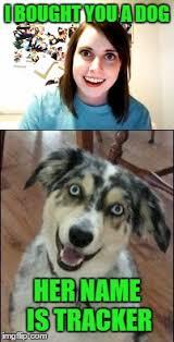 australian shepherd meme overly attached dog imgflip