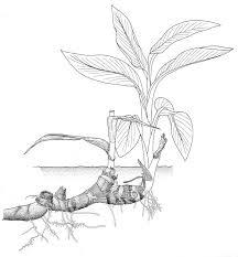 Vegetative Propagation By Roots - best 25 vegetative reproduction ideas on pinterest flowering