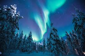 enchanting finland igloo stay with private reindeer safari total