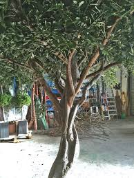large artificial olive tree