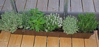 Bambus Garten Design Kräuter Pflanzen Balkon Zeitpunkt 16 59 24 Egenis Com